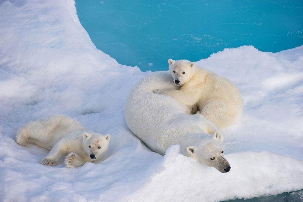 Animais-Que-Vivem-No-Gelo-9