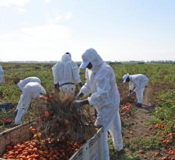 agricultores_exploracao