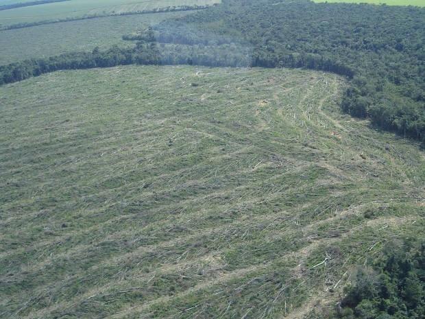 desmatamentobrasil