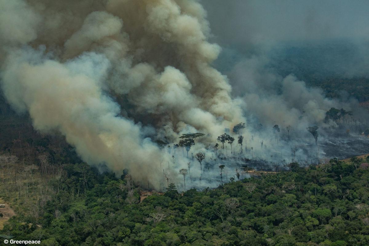 Vista aérea de uma grande queimada em Rondônia. Foto: Victor Moriyama – Greenpeace