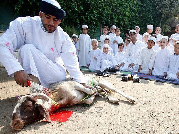sacrificio-de-animais