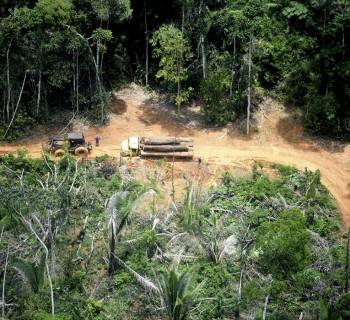 Retirada de madeira ilegal na Terra Indígena Karipuna, registrada em 2019. Foto: Chico Bata/Todos os Olhos na Amazônia