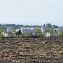 Luta contra a contratação ilegal começa na Apúlia, sul da Itália   (ANSA).